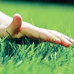 Газонная трава КАРЛИК-низкорослая и медленнорастущая
