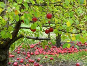 Деревья осенью.
