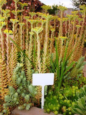 Садовые таблички малые