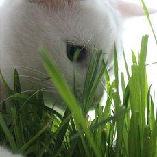 кот и трава