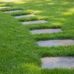 Газонная трава ТЕНЕВЫНОСЛИВАЯ